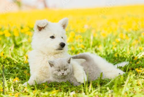 Dog embracing cat on a dandelion field