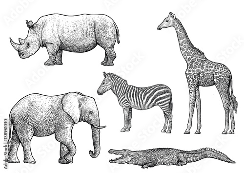 Line Drawings Of African Animals : Quot african animals illustration drawing engraving ink