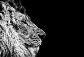 Foto auf Leinwand Löwe Portrait of a Beautiful lion, Cat in profile, lion in dark