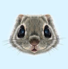 Illustrated portrait of Flying squirrel