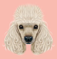 Illustrated Portrait of Poodle dog