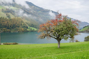 Tree in front of the lake with green and red leaves