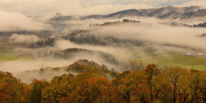 morning fog forever