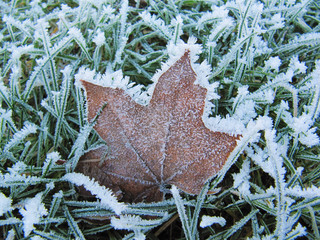 Extreme Frost