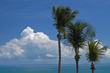 Palm Trees in Puerto Rico