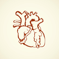 Heart. Vector drawing