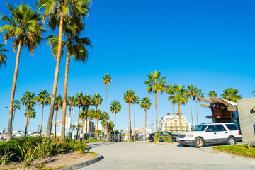 Palm trees in Venice beach