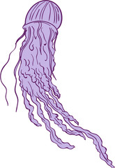 Australian Box Jellyfish Drawing