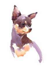 Watercolor Dog Chihuahua Portrait - Hand Painted Animals Pets Illustration isolated on white background
