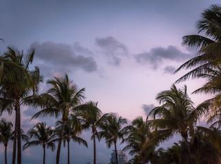 Palm trees at Miami beach