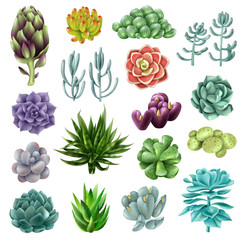Isolated colored succulents