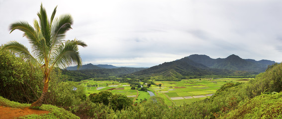 High angle view of Taro fields and valley from Hanalei lookout Kauai, Hawaii