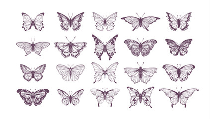 Set of butterflies, ink silhouettes. Glowworms, fireflies and butterflies icons isolated on white background. Hand drawn separated editable elements, Vector illustration.