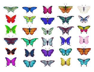 Colorful collection of different butterflies for summer and spring design, insect set, isolated on white background. Handdrawn separated editable elements, Vector illustration.