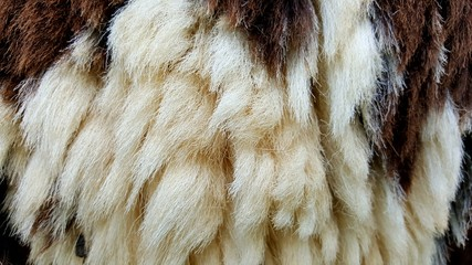fur texture or fur texture background