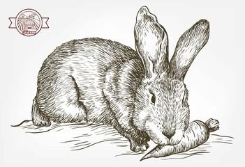 sketch of rabbit drawn by hand. animal husbandry