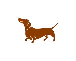 Hand drawn dachshund