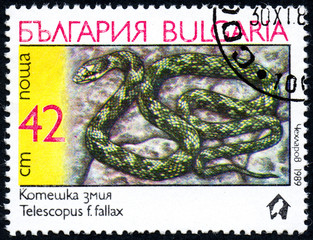 "UKRAINE - CIRCA 2017: A stamp printed in Bulgaria, shows the image snake with the description ""Telescopus f.fallax"" from the series ""Snakes"", circa 1989"
