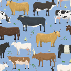 Set of bulls and cows farm animal cattle mammal nature beef agriculture and domestic rural bovine horned cartoon buffalo character vector seamless pattern