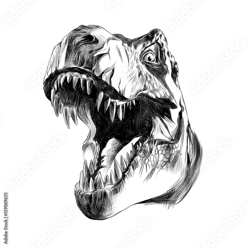 dinosaur head sketch vector