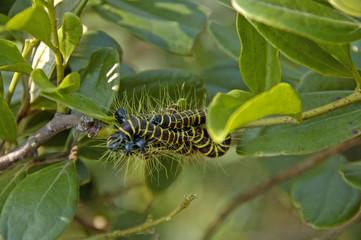 catterpillars in a bush