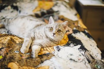 little kitten on the kitty tapestry