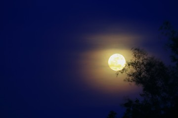 Full moon beautiful over dark  sky at have  tree shadow in night