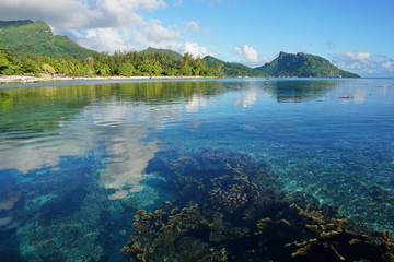 French Polynesia Huahine island coastal landscape seen from the lagoon with corals in shallow water below sea surface, south Pacific ocean