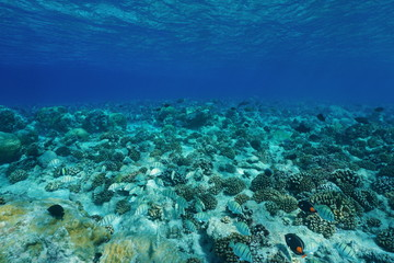 Underwater Pacific ocean floor clear water with fish and corals, natural scene, Atoll of Rangiroa, Tuamotu, French Polynesia