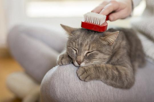 Brushing the cat