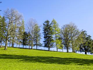Tree row deciduous trees an conifers, Austria, Lower Austria, Mo