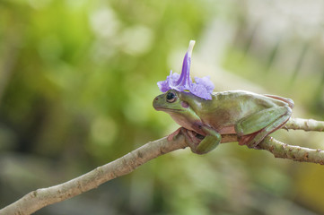 Frog With Hat Flower