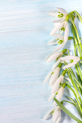 Spring snowdrops on rustic background