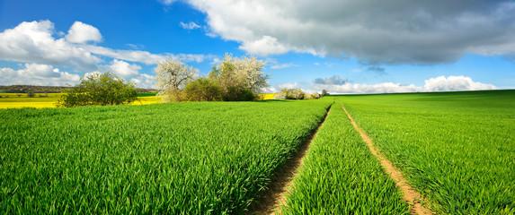 Landschaft im Frühling, grünes Feld, Traktorspur