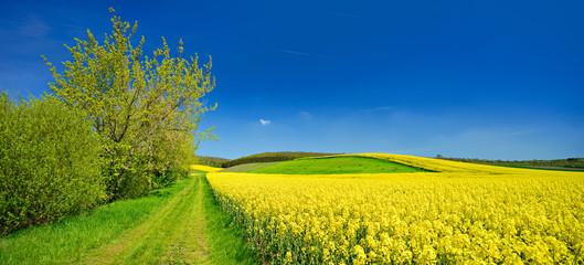 Kulturlandschaft im Frühling, blühendes Rapsfeld, Feldweg, blauer Himmel