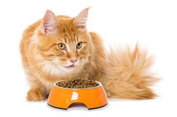 Katze mit Futterschüssel