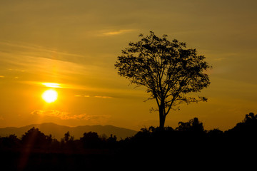 Beautiful landscape image with sun and trees silhouette at sunset