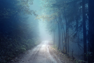 Wall Mural - Dreamy evening autumn color foggy forest road. Scary dark blue green colored countryside woodland.