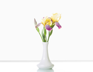 Beautiful iris flowers in white vase