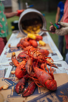 Lobsters laid out on table for Lobster Boil dinner