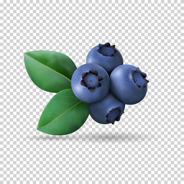 Blueberry with leaves isolated on transparent background