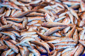 Fresh fish for sale on fish market. Red mullets. Mullus barbatus