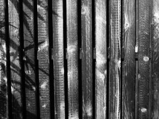 Schatten einer Pflanze auf einem Holzpaneel in der Hansaallee in Münster in Westfalen im Münsterland, aufgenommen in Schwarzweiß