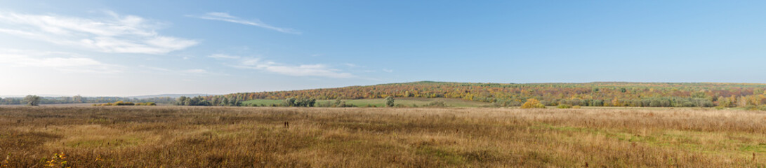 Landscape Panorama. Russian Field Overlooking The Forest With Autumn Colors And Blue Sky.