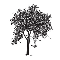 Apple-tree silhouette on a white background