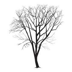 Chestnut silhouette in the winter