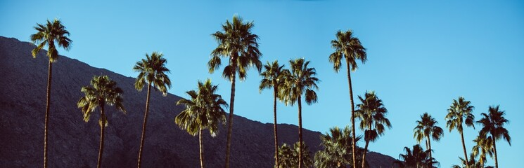 Palm trees with hill in background