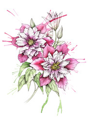 A bouquet of clematis