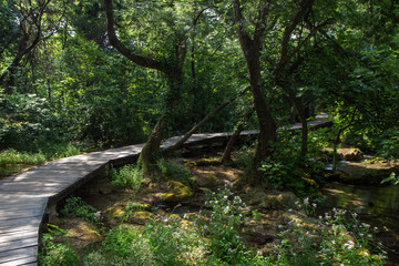 Wooden walkway in a lush and verdant forest at the Krka National Park in Croatia.