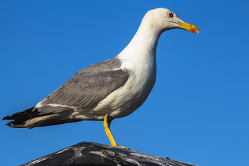 sea gull sitting on the roof